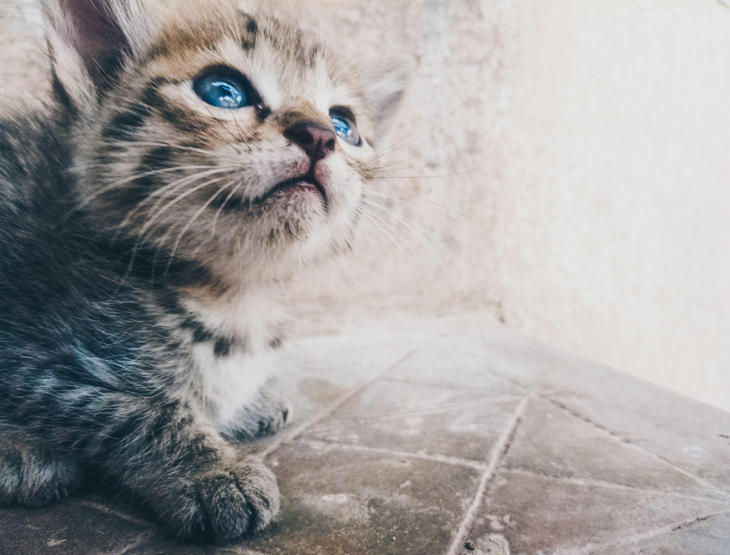 Uppmärksam katt